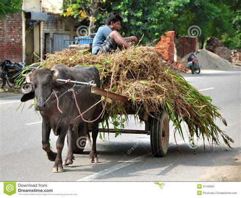 indian cart indian bullock cart editorial photo image 21106901