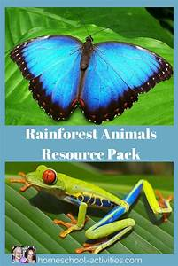 Homeschool Science  Rainforest For Kids Activities