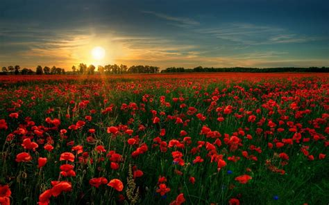 poppy fields remembrance day the importance of remembrance day nick riley my perspective my life of riley