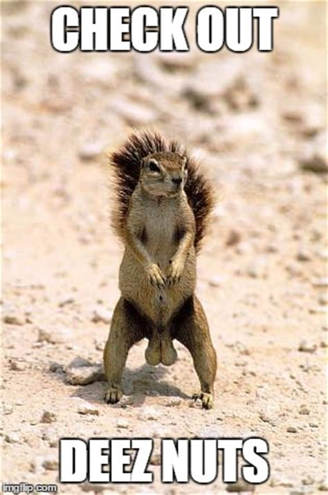 Squirrel Nuts Meme - squirrel nuts meme 28 images 25 b 228 sta squirrel memes id 233 erna p 229 pinterest roliga