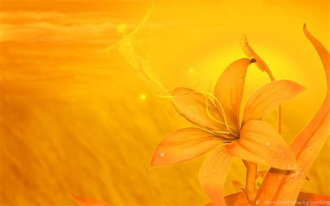 yellow flowers backgrounds wallpapers walldevil
