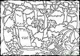 Rainforest Coloring Pages sketch template