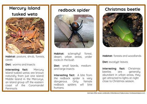 animals  australia  oceania nomenclature