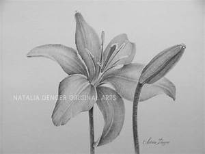 Lilies MATTED 16x20 ORIGINAL Drawing Day Lily