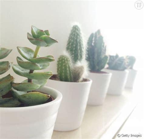 plante verte bureau 5 bonnes raisons de vous offrir une plante verte