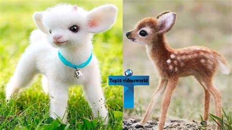 Top 10 Most Adorable Funny & Cute Baby Animal Videos YouTube