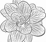 Spinach Coloring Pages Printable sketch template