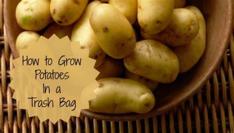 growing potatoes   trash bag  gardening cook