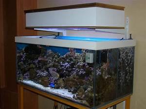 Photo Aquarium Fait Maison
