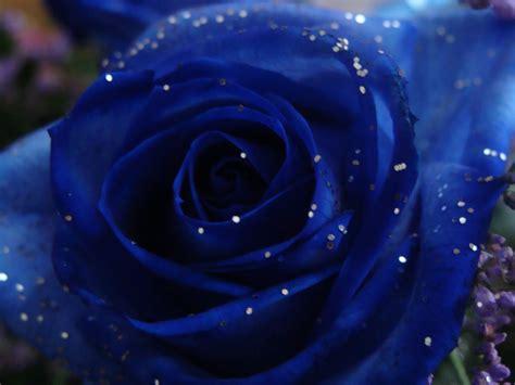 De Tudo E Mais Um Pouco: Rosas Azuis { postado}