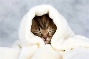 can cats get colds 40 blankets for cats ranked catster