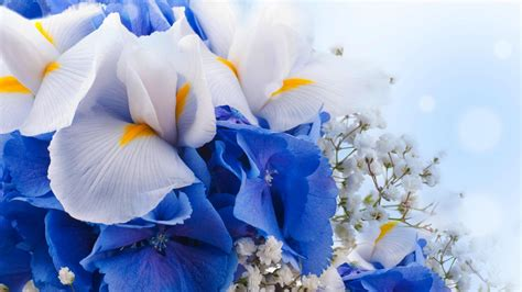 wallpaper flowers bouquet blue hydrangeas iris flowers
