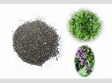 Tulsi Seeds Rudraksha Ratna