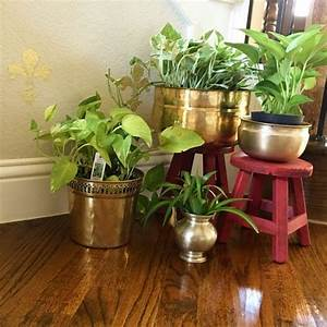 Decorating Plants Indoor - The Indian Way | Threads