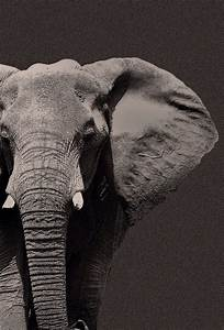 artsy elephant | Tumblr