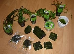 Pflanzen Für Aquarium : nano aquarium kaufen einkaufsliste kauf eines nanoaquariums ~ Buech-reservation.com Haus und Dekorationen