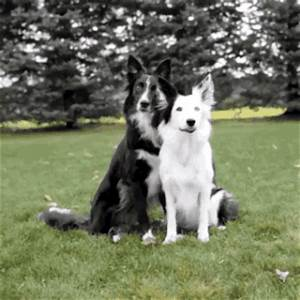 Dog Hug GIF - Find & Share on GIPHY