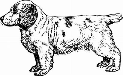 Spaniel Cocker Drawing Clipart Clumber Clip Dog