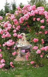 Garden Feelings Wer Steckt Dahinter : kletterrosen gartenideen kletterrosen kletterrosen ~ Watch28wear.com Haus und Dekorationen