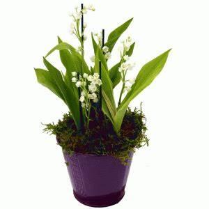 Quand Planter Le Muguet : le muguet fleur de printemps traditions et plantationle ~ Melissatoandfro.com Idées de Décoration