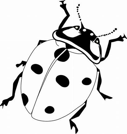Ladybug Coloring Clip Pages Printable Getcoloringpages Adults