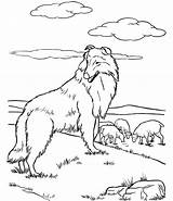 Shepherd Coloring German Pages Dog Colouring Realistic Drawing Australian Popular Library Getdrawings Coloringhome sketch template