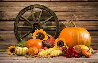 Pumpkin Still Thanksgiving Harvest Autumn Fall Pumpkins