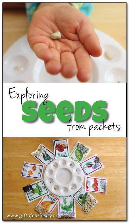 exploring seeds  preschoolers part  preschool