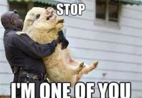 Pictures Meme - funny police meme jokes memes pictures