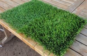 Rouleau Gazon Naturel : gazon naturel ~ Melissatoandfro.com Idées de Décoration