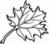 Oak Coloring Leaf Leaves Pages Eastern Tree Printable Outline Supercoloring sketch template