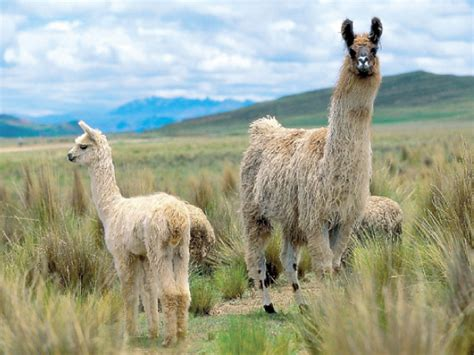las ocho regiones naturales del peru region quechua