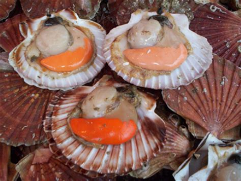 cuisiner le corail des coquilles jacques coquilles st jacques au beaujolais recettes a cuisiner