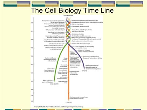 The Cell Biology Cell Biology