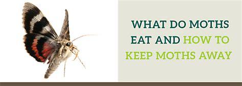 moths eat     moths