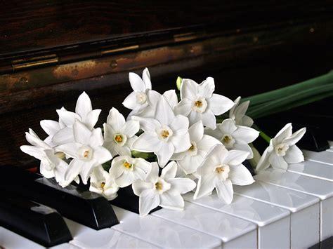 foto gratis strumento petali fiori orchidea bianca