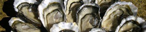 cuisiner les huitres cuisiner les huîtres huîtres au concombre et feuilles de