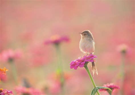 animals plants flowers birds wallpapers hd desktop