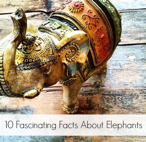 world elephant day fascinating facts  elephants