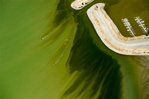 Utah Lakes Poop Driven Algal Bloom Is A Crappy Situation