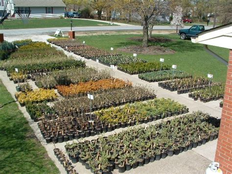 How To Start Nursery Plant Business starting a nursery business 10 amazing steps to follow