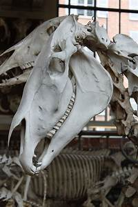 Horse Skull 2 By Citronvertstock On Deviantart  Mit