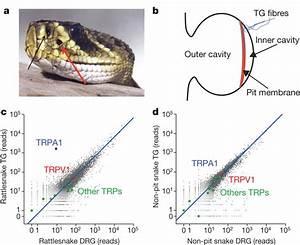 Snake Anatomy Diagram