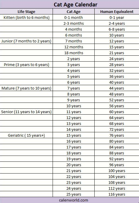 cat years compared to humans cat age calendar cat age calculator cat age converter