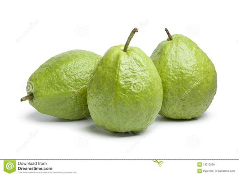 what to do with fresh whole fresh guava fruit stock photo image of studio 19013520