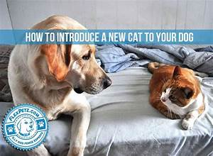 how to introduce a new cat to your dog With how to introduce a puppy to a dog