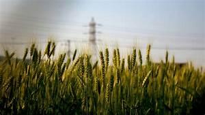 HD Grass Wallpaper - HD Wallpapers