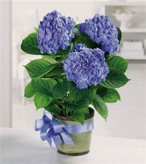hydrangea flower arrangements  interior decorating