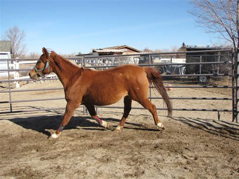 fat horse horses animals wallpapers