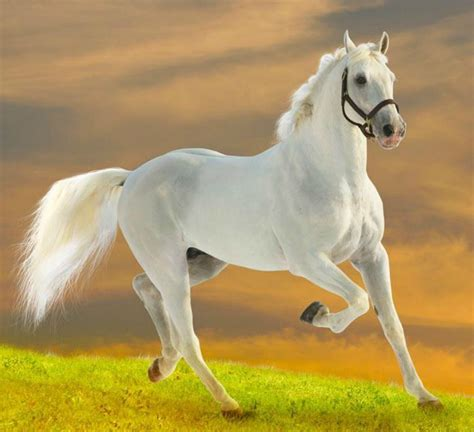 animals horse domestic horses animal hd run funny wallpapers most hdwallpapers cat
